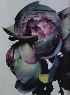 FFFFOUND! #nature #dark #purple #flowers
