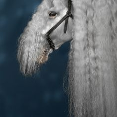 basic_sounds #photography #horse #portrait