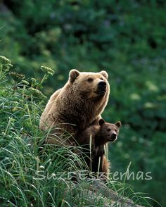 Bear with son photography