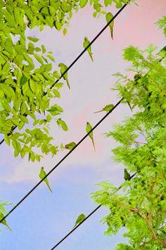 by Yoshimori Mizutani #photography #portrait
