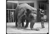 Mrcup-blogselection-12.jpg (изображение «JPEG», 900×567 пикселов) #elefhant