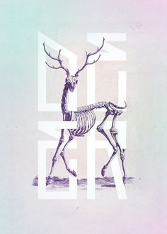 Bone - Anatomy Illustrated on the Behance Network #illustration #typography