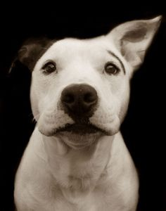 underexposed #dog