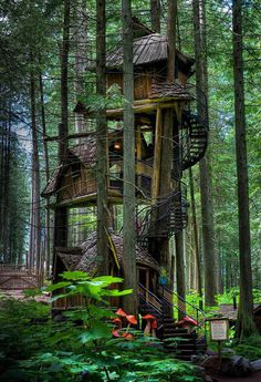 A Treehouse In British Columbia, Canada #treehouse