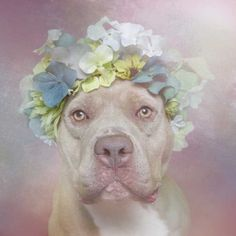 Flower Power by Sophie Gamand #inspiration #photography #animal