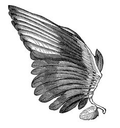 *The Graphics Fairy LLC*: Search results for wings #wings #illustration #magpie