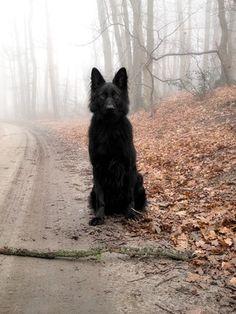 FFFFOUND! #black #dog