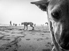 #dog #photo