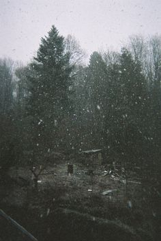 tumblr_mihpgaibmT1rmjruoo1_1280.jpg (1232×1840) #forest #photography #snow