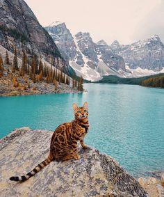 The Adventures of Suki The Cat