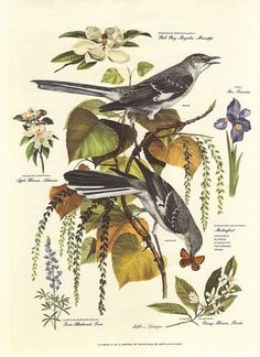 Vintage Arthur Singer MOCKINGBIRD Bird #botanical #print #birds #illustration #vintage