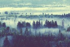 Life on Sundays #forest #fog #tree #beauty