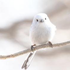 Birds of Japan: Beautiful Bird Photography by Keisuke Oda