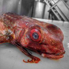 Russian Deep-Sea Fisherman Roman Fedortsov Photographs His Terrifying Catches