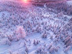 Winter Forest of Finish Lapland From Above by Tiina Törmänen