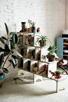 wooden shelf, plants #plants