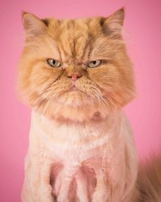 Fat Cats: Peter Thorne Captures Adorable Photos of Toronto's Chubby Cats
