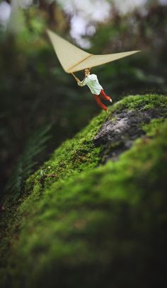 Fiddle Oak #inspiration #photo #photography #manipulations