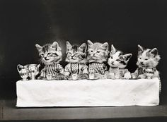 LOLCats by Harry Whittier Frees #inspiration #white #black #photography #and
