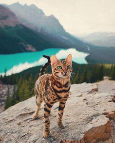 Meet Suki, The Adventure Wondercat Who Became an Instagram Star