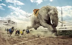 Dogs Racing an Elephant