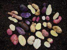 FFFFOUND! | DSCN7746.jpg (748×561) #potato