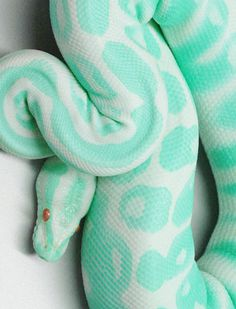 snake, mint #animals #snake #mint