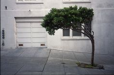 Untitled | Flickr - Photo Sharing! #concrete #plants #landscapes #trees #green