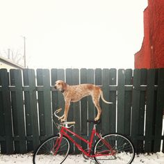 swissmiss | Maddie On Things #photography #bike #dog
