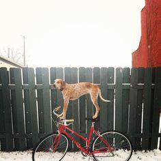swissmiss | Maddie On Things #photography #bike #dog