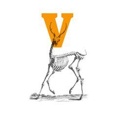 Vertebrata™ - Typeface Family on Behance