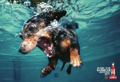 Cepêra Extra Strong Pepper Sauce: Dachshund | Ads of the World™ #pepper #sauce #photo #advertisement #hot #underwater #dog
