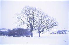 Triangular Love. #photography #tree #winter