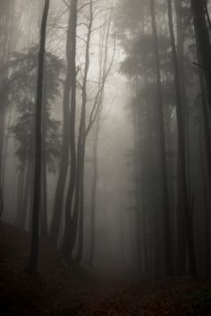 Stopping by Woods on Behance #woods #photography #fog