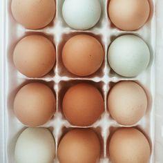 egg eggs