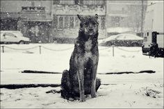 Victor Eredel | PHOTO DONUTS DAILY INSPIRATION PHOTOGRAPHY #photography #winter #dog #loyalty #patience
