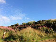 Braidwood - Scotland