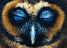 Photo by Robert Utrecht #owl #animals