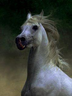 Stunning Horse Photography by Wojtek Kwiatkowski | Abduzeedo | Graphic Design Inspiration and Photoshop Tutorials #horse photography