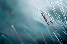 Stephane Occhipinti #inspiration #photography #macro