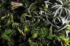 Makoto Azuma 2 #design #nature #flower #colourfull #makoto #azuma