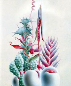 Amazing Cactuses
