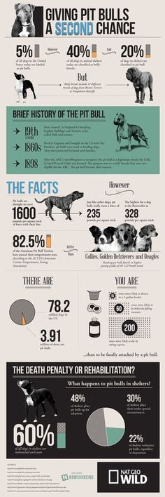 The Truth About Pit Bulls #infographic #design #graphic