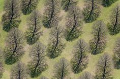 by Aerial Photography #shadows #branches #trees