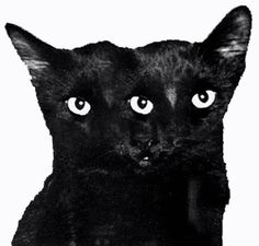 ghostcat3.jpg (301×288) #ghostcapital #cat #black