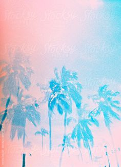 Dreamy palm trees, shot on film #analogue #photography #film #pastel
