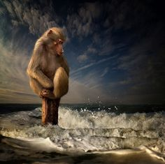 Dog Adventures by Jeannette Oerlemans | Cuded #ocean #water #photo #monkey #fear #foam #sea #manipulation #dry #splash #waves