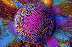 Millefiori No. 01 (2012) Ferrofluid is a magnetic, hydrophobic liquid that forms colorful curves and channels when deposited onto a magnet a #colors #color