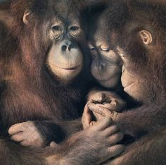 More Than Human35 #family #animals