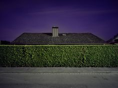 Image Spark dmciv #fences #architecture #plants